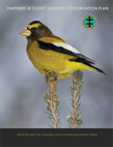 Scientists Document Widespread Declines, Urgent Need for Conservation of Landbirds in U.S. and Canada