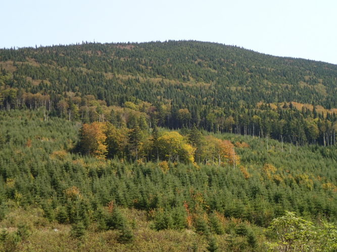 Forestry landscape with patch retention